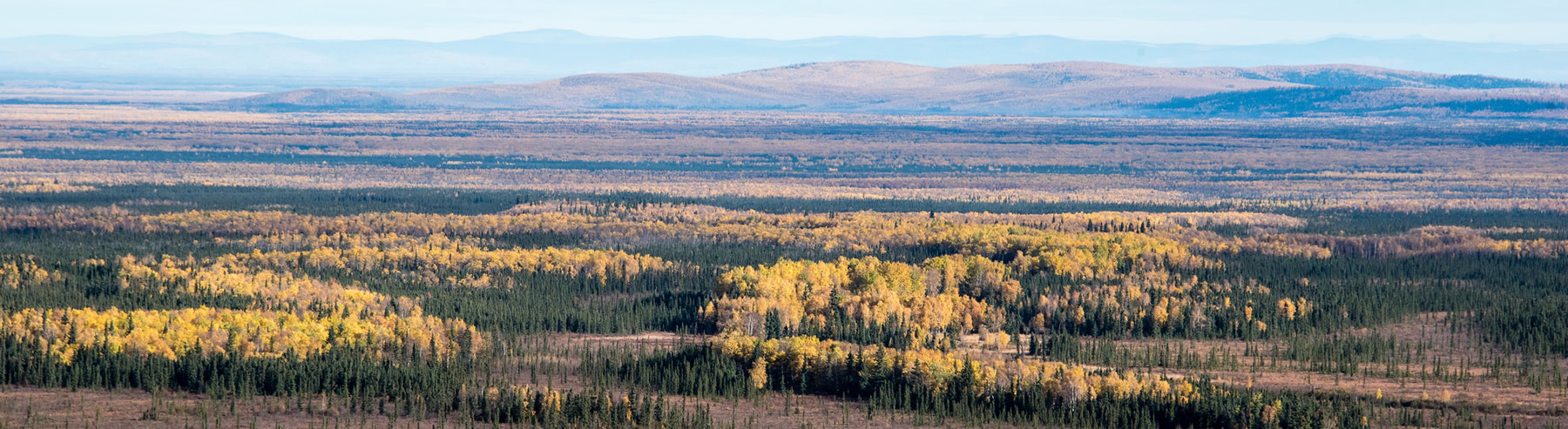 alaska-bear-hunting-banner