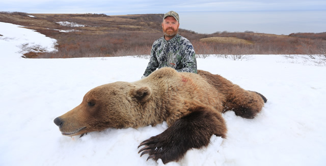 alaska_grizzly_bear