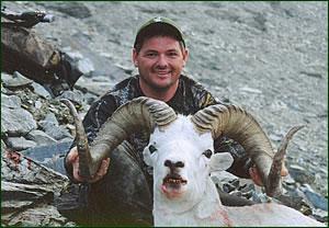 "Gary English 39"" Dall Sheep"
